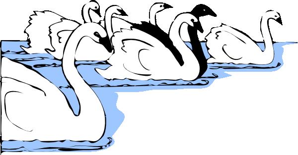 Swan pic