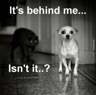 Funny-dog-scared-cat
