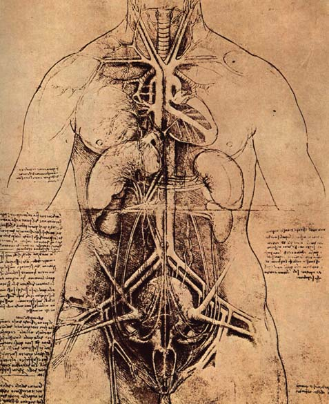 Leonardo_da_vinci,_Drawing_of_a_Woman's_Torso
